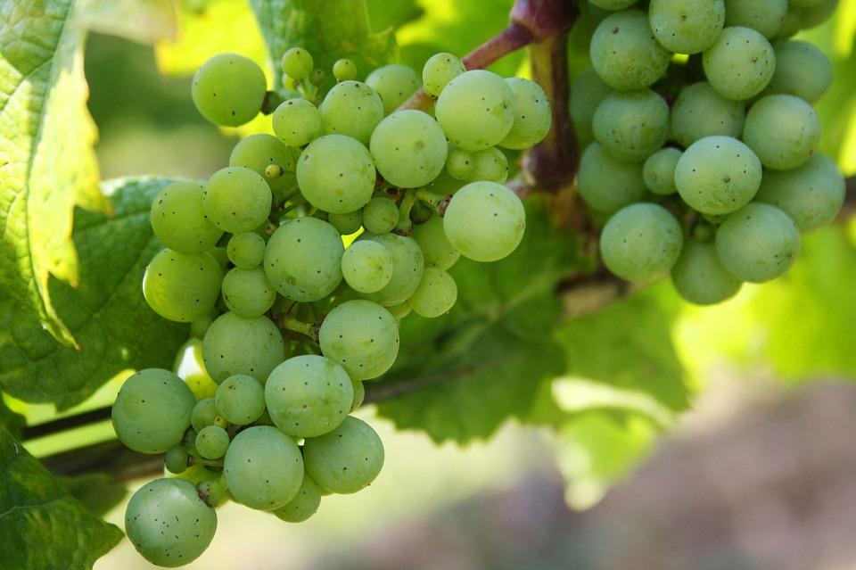 Lente- & Zomeruitjes SWO/E: Uitstapje naar de Wijnboerderij