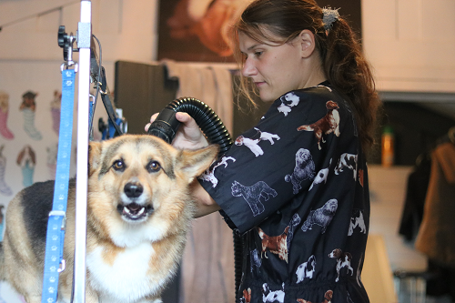 5 jarig bestaan hondentrimsalon Loco Perro