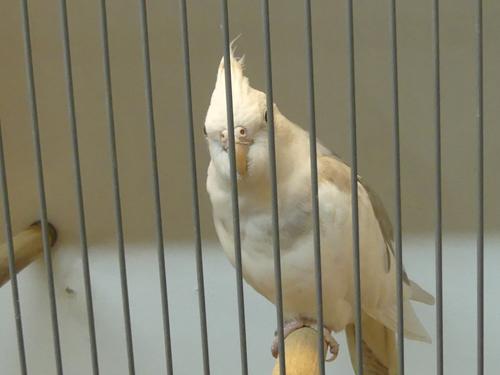 Tentoonstelling van Ver. van vogelliefhebbers De Cannenburgh