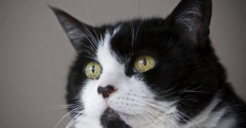 De Stentor meldt; Katteneigenaren opgepast!