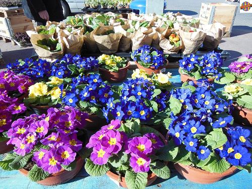 Bloemen- en tuinmarkt op pakeerplaats Julianalaan Vaassen