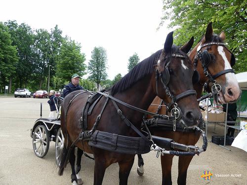 25e Eper paardenvierdaagse doet Vaassen aan!