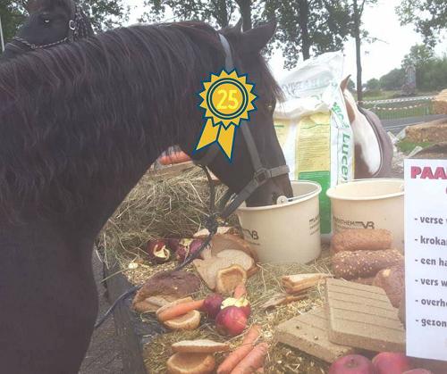 Middenstip organiseert met dier All-in Epe een lopend buffet speciaal voor paarden!