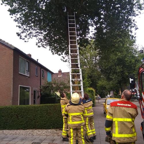Brandweer haalt na 4 dagen kat uit boom aan de Kerkweg