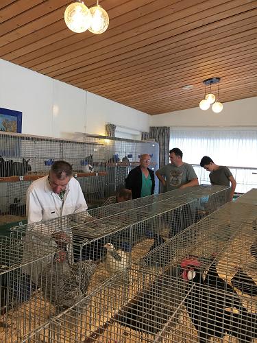 Jongdierendag kleindierenvereniging  Vaassen en Omstreken