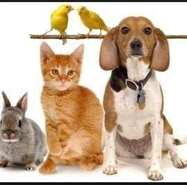 Aanvang voedselbank voor dieren Vaassen