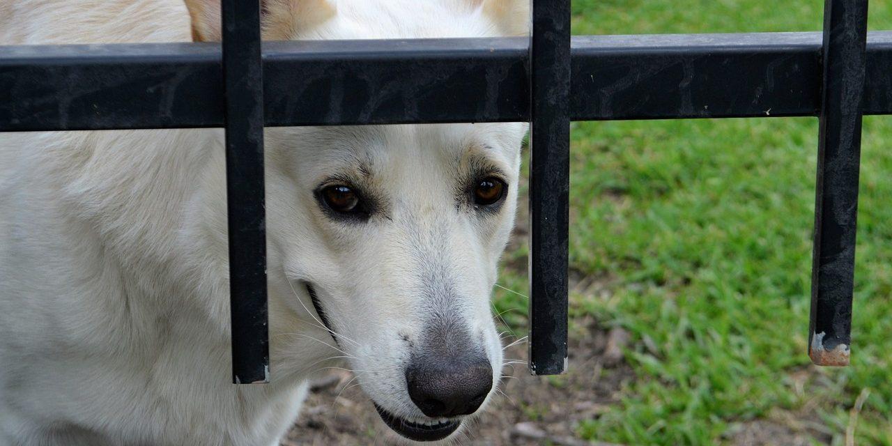 Controle hondenbelasting