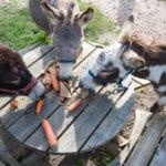 Nieuw kinderfeestje: zwemmen en ezel rijden