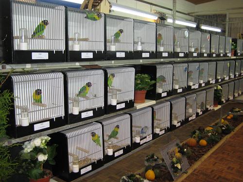 Vogeltentoonstelling v.v. De Cannenburgh.