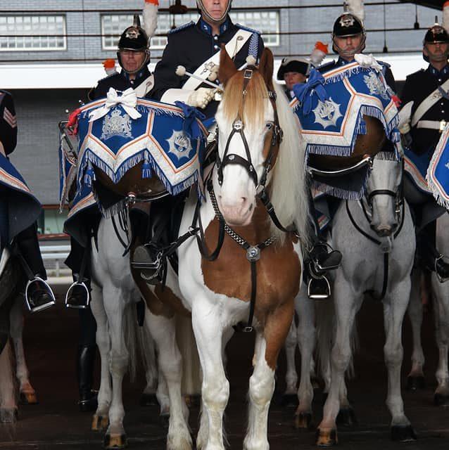 Tinker Bobby … een bijzonder paard is helaas overleden.