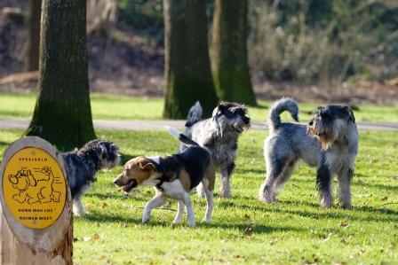 Afspraken over honden. Wat vindt ú ervan?