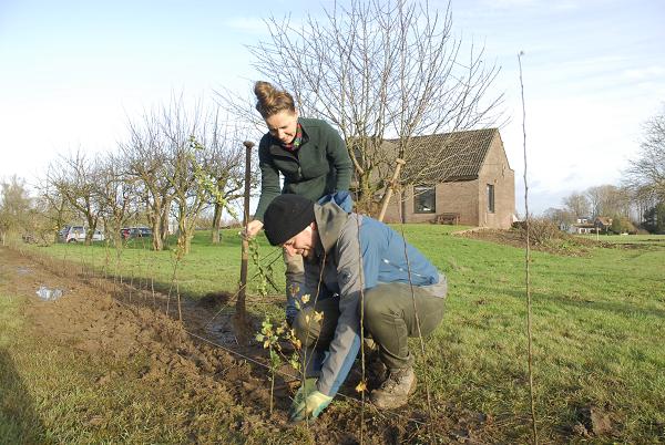 Plant bomen voor een energieneutraal Gelderland