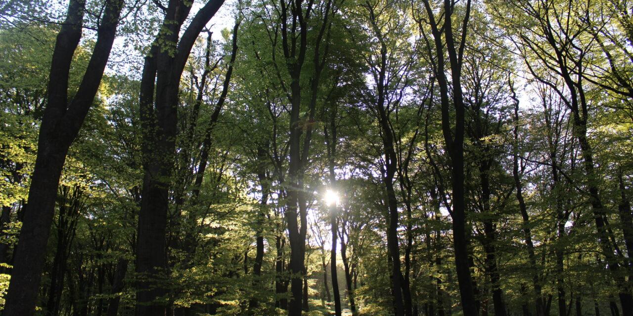 Open dagen bij Natuurbegraafplaats Elspeterbos op 3/4 juli en 10/11 juli 2020