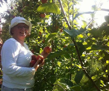 appels en peren plukken voor stichting Sidney and friends Emst