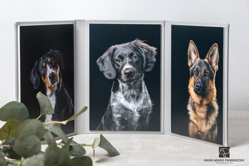 Anne-Marie Pannekoek Fotografie dierendagactie