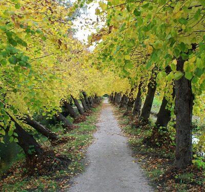 Lobke op pad bij de Cannenburch, de herfst op zijn mooist!