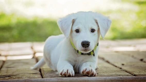 Hondenbelasting: Is uw hond al aangemeld?