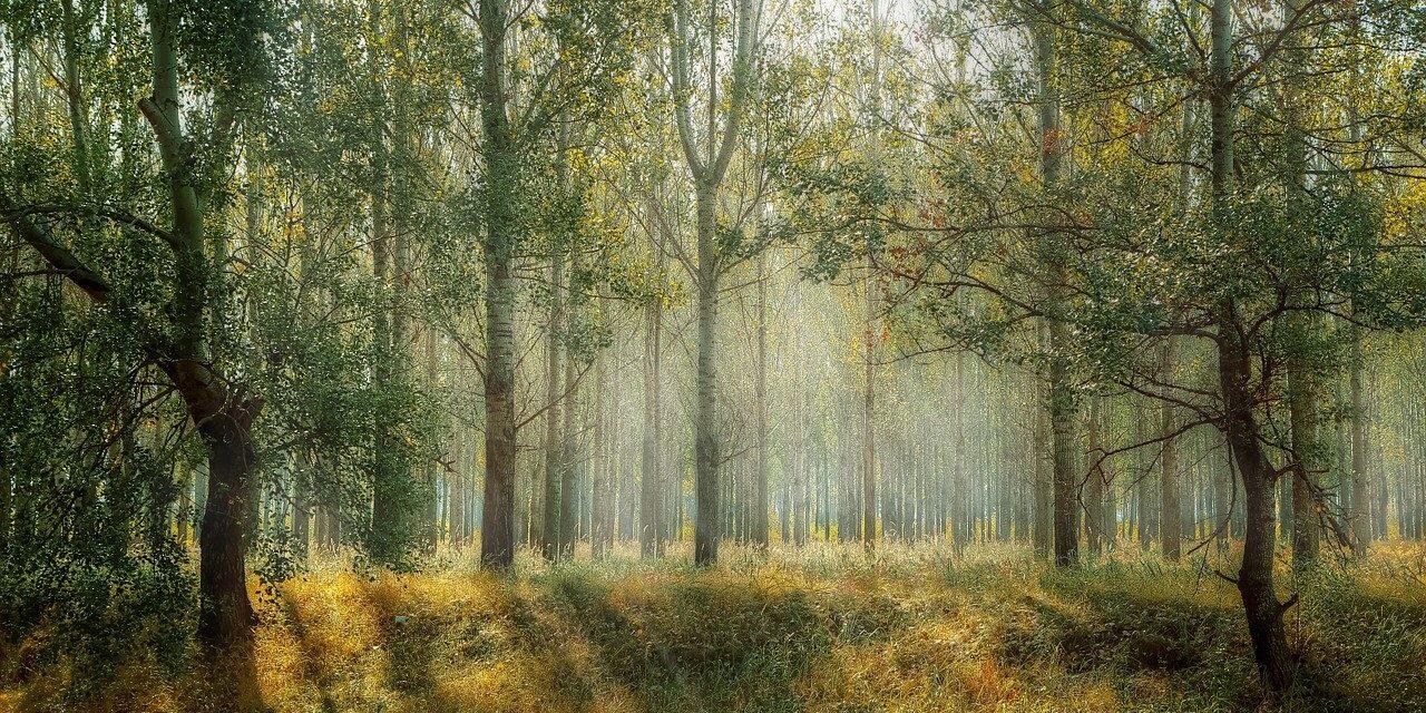1e hectares nieuw bos in Gelderland liggen bij Epe
